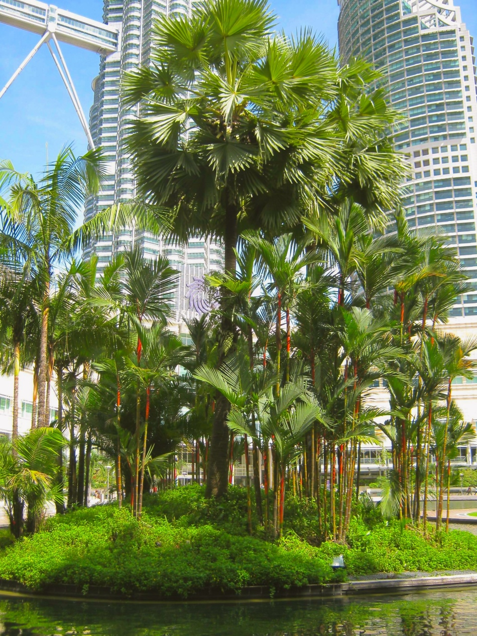 Trees by Petronas Towers