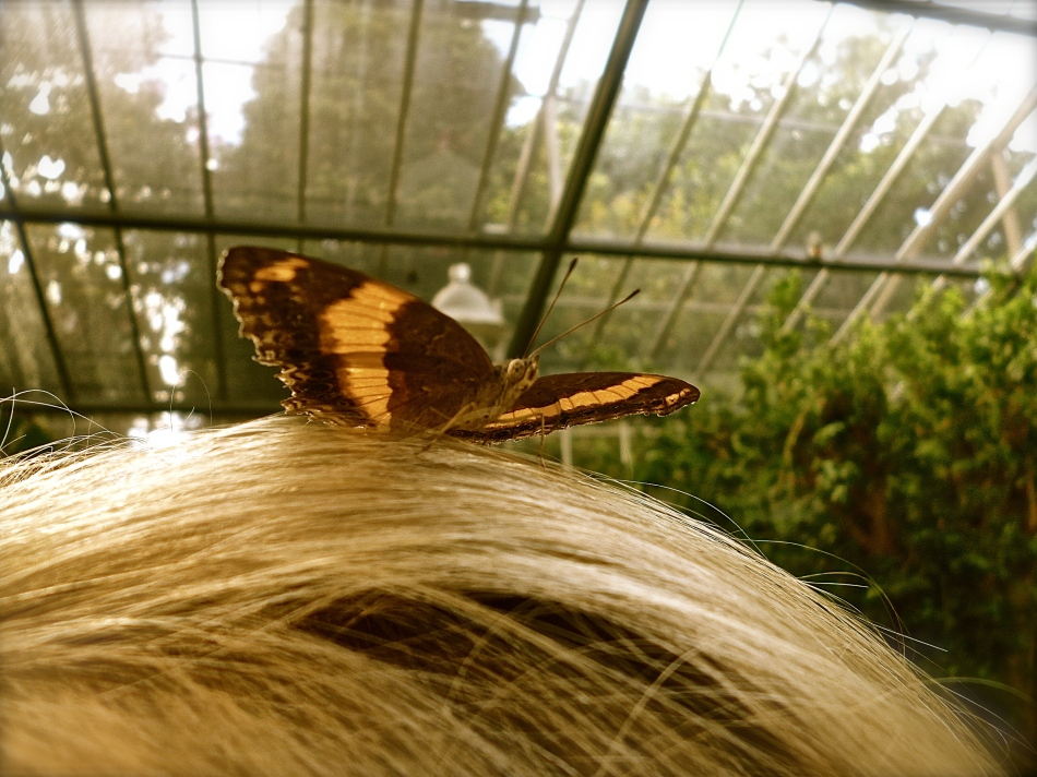 The Royal Melbourne Zoo butterfly enclosure