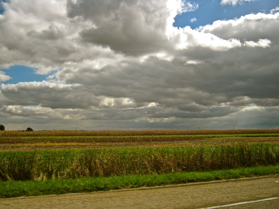 Fields of Illinois