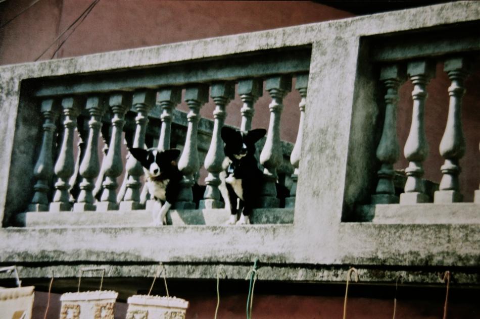 Kathmandu Dogs