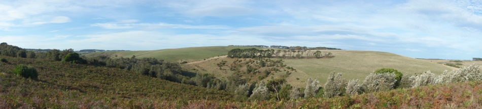 Mornington Peninsula National Park - Field