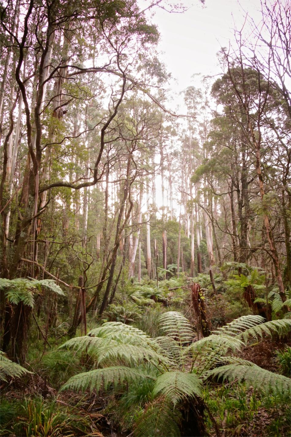 Olinda Falls01