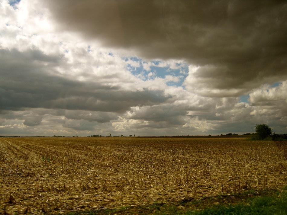 Illinois Crop Field