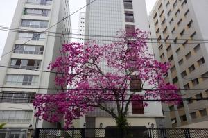 Sao Paulo19